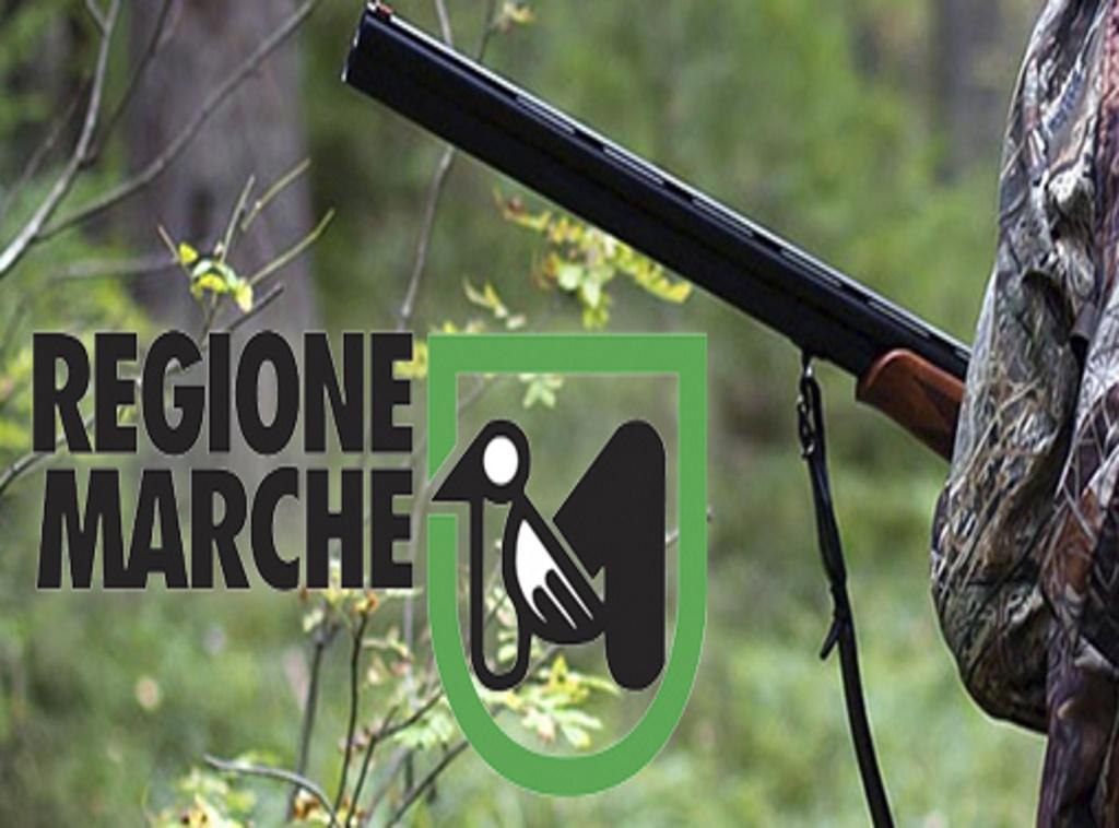 Caccia_Marche